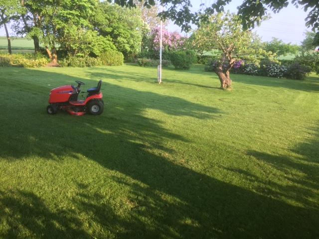Græsslåning - fast pasning af stor have.