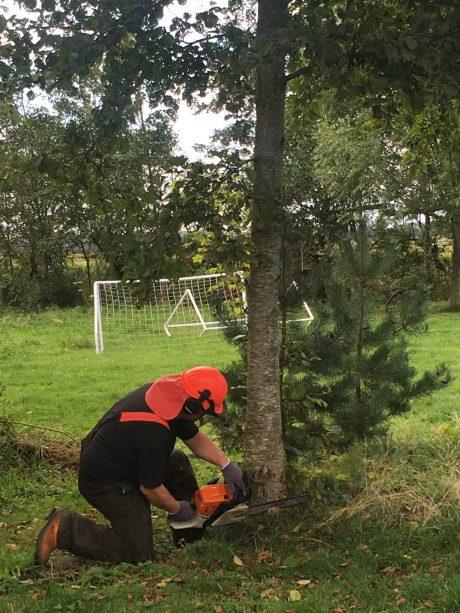 Mandogbil fælder træ