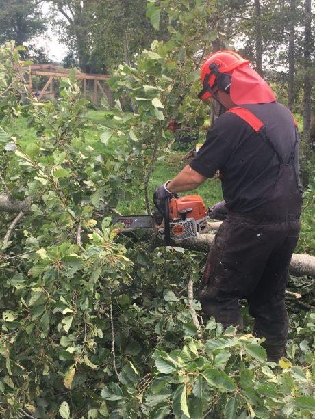 Skovhugger beskærer fældet træ